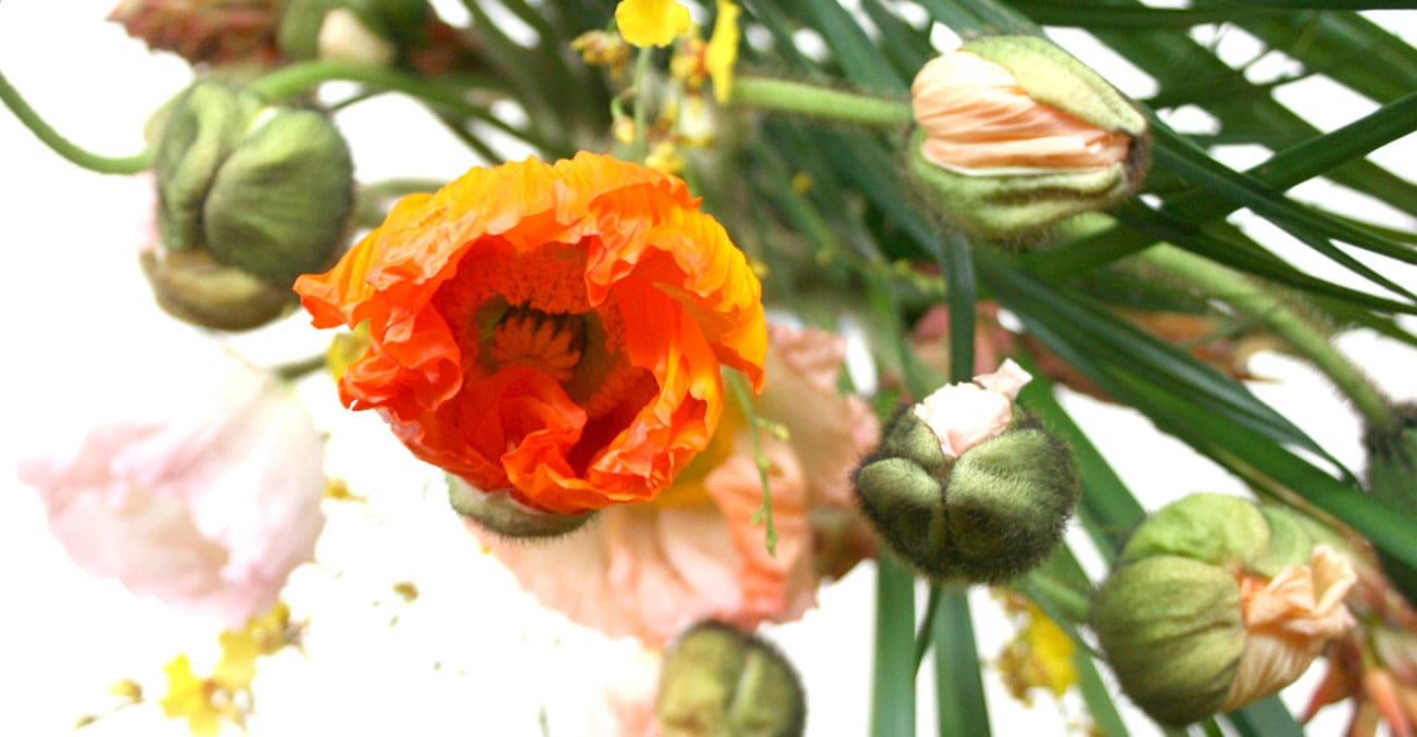 BS_Blumen1
