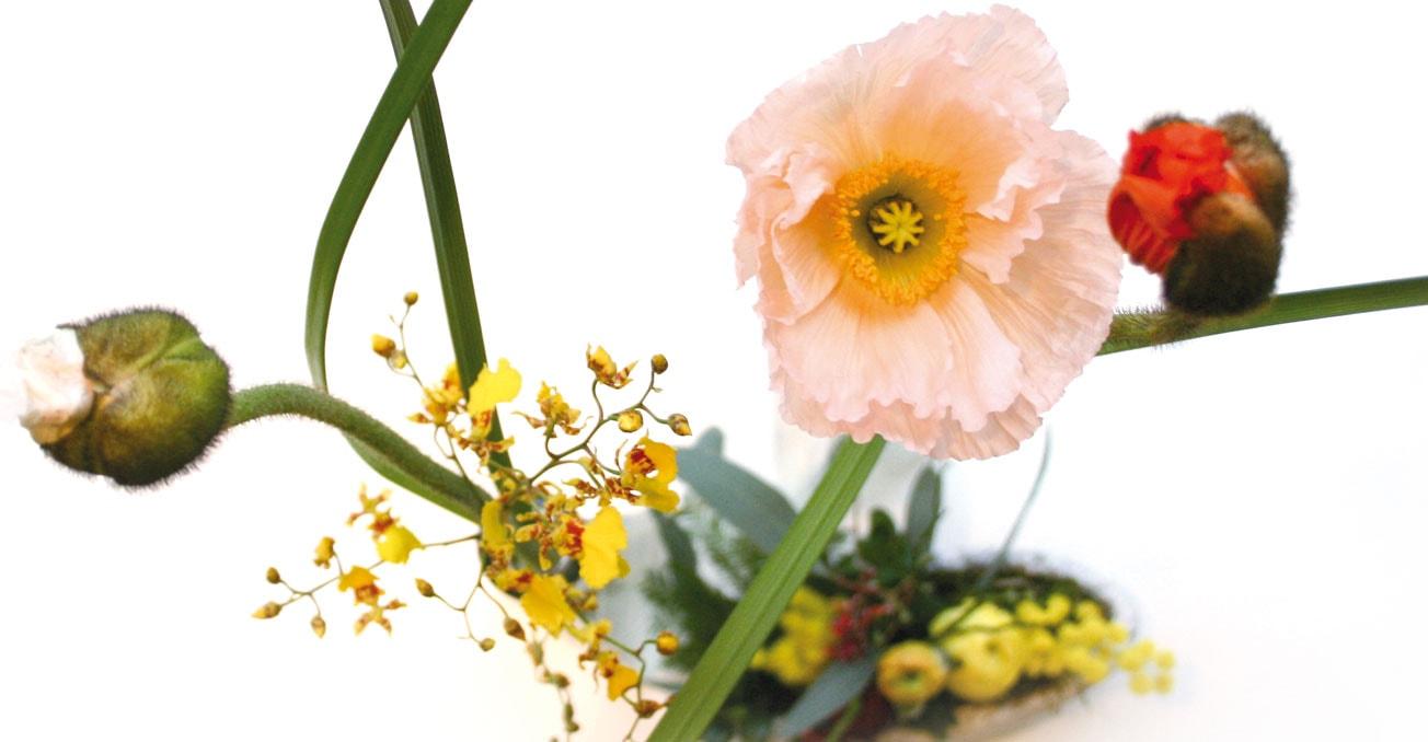 BS_Blumen2